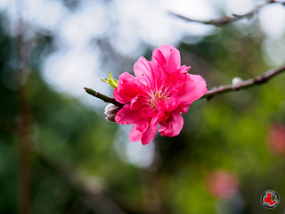 Spring · Plum