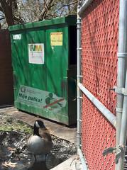 No Ducks Dumpster