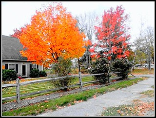 Autumn Scene In Chelmsford, MA. On October 25, 2014 - Photo by STEVEN CHATEAUNEUF - Minor Editing Was Done by STEVEN CHATEAUNEUF On March 29, 2015