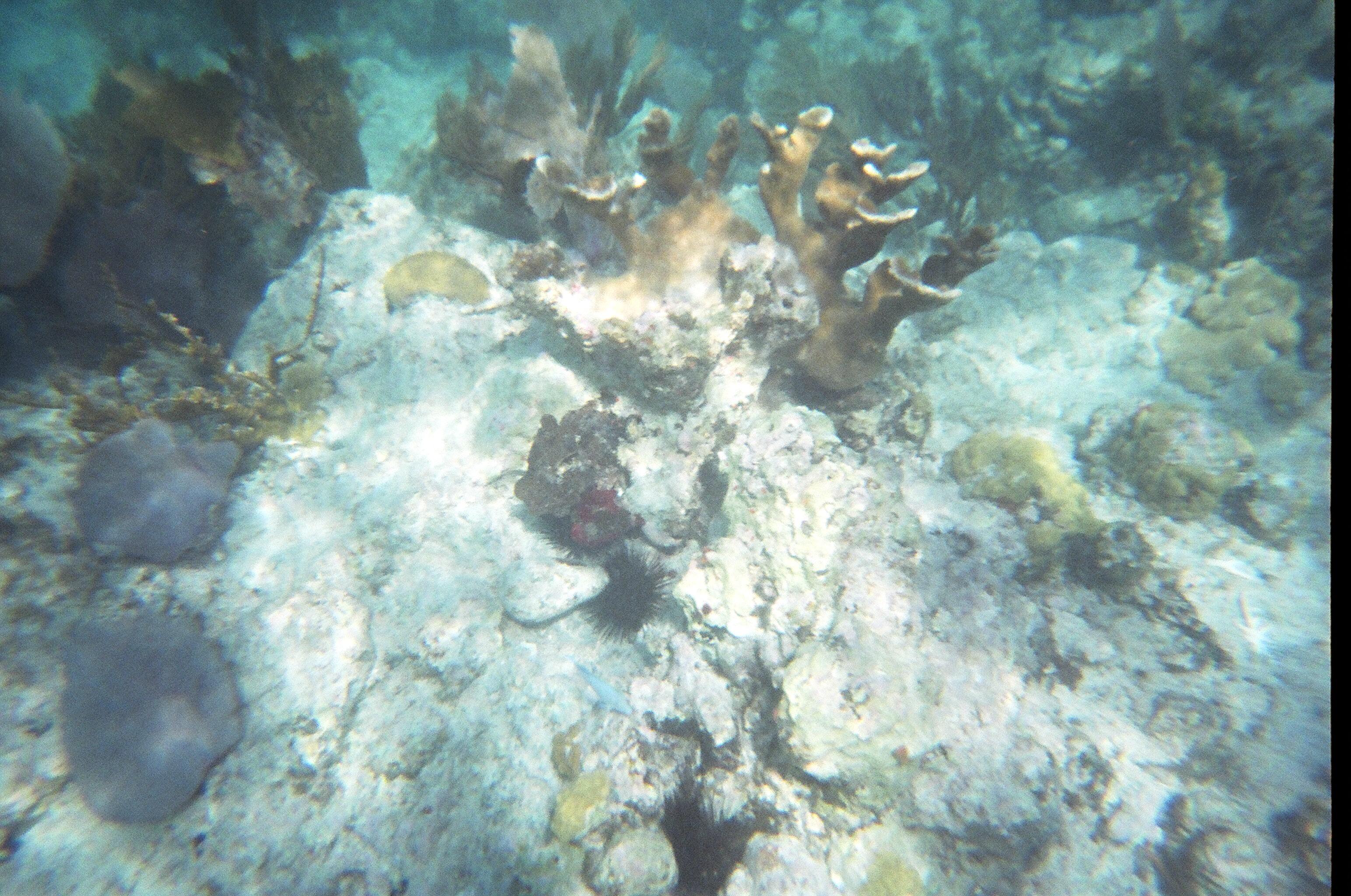 Coral Trunk Bay, St. John, USVI