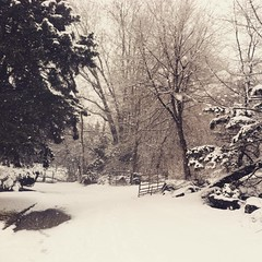 First day of #spring. #snow #nature #trees #pa #philly #march #equinox #picoftheday