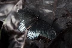 Papillons en Liberté 2015 - Photo 28