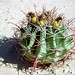 Cactus_Rocky_Point_Mexico_549_26 por David Duane Photography