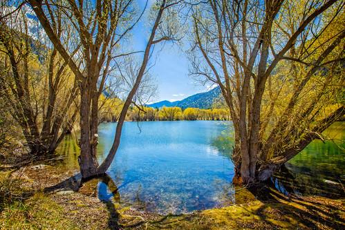 trees lake shadows palmerlake okanogancounty