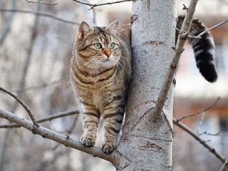 Street cat 97