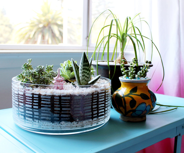DIY Succulent Dish Garden | click through for the tutorial and tips for keeping succulents happy indoors