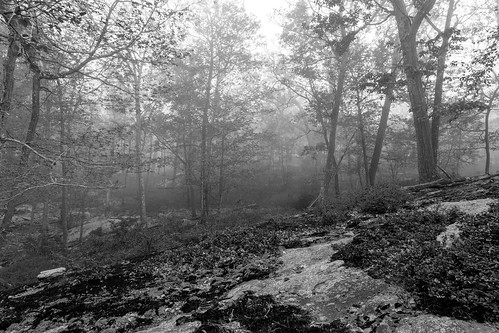2015 ny newyork blackandwhite fog foggymorning foliage forest harriman harrimanpark hike hiking monochrome morning nature naturehike silver spring sunrise woods sloatsburg unitedstates us rocklandcounty plants bnw city weather nycity colors color harrimanstatepark