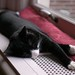 Black cat taking a nap by the window by Long Sleeper