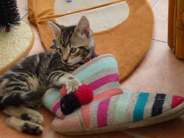 Baby Mara in a Slipper !
