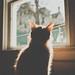 Puddy Sun-Soaker by Kilkennycat