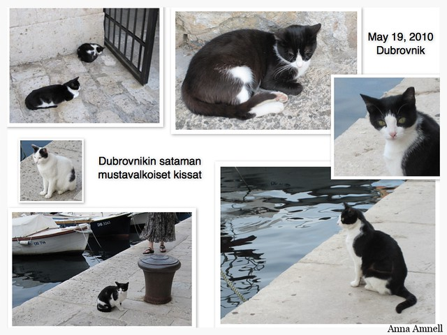 Sataman kissat