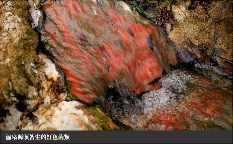 加年端溫泉085