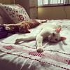 enjoying the spring sun #cats #catsofinstagram #cute #love