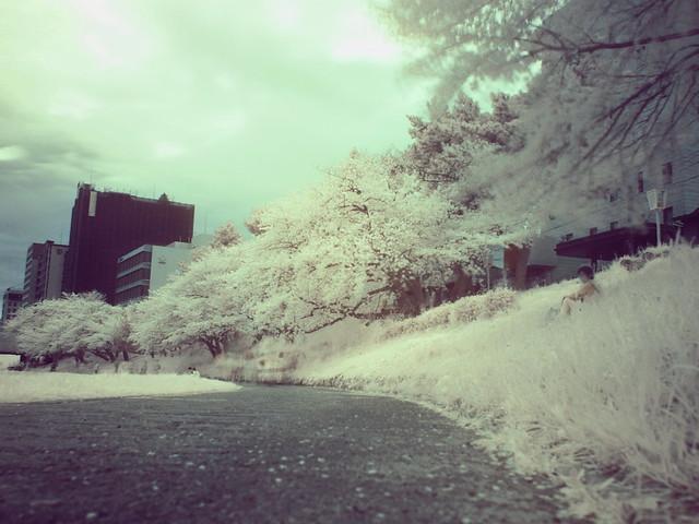 150404_IR_Sakura_CS_3