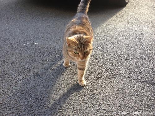 Tue, Mar 24th, 2015 Found Female Cat - Watson, Killiney, Dublin