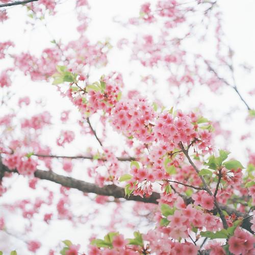 季節を感じる食材を使って食育を~春の味覚、グリーンピース~のタイトル画像
