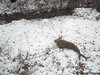 Seara (sea rabbit) on the ground with fresh new snow on January 6, 2015. 20150106 012=25=3020
