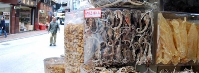 亞洲中藥行的「乾貨」海馬。© Project Seahorse.