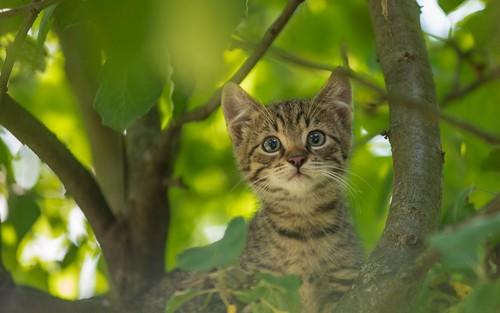 cats animals kitty croatia kittens catsdogs animalplanet hrvatska hrvatskozagorje nikkor8020028 zagorje nikond600