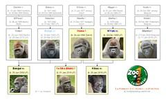 Gorilla Family - La Palmyre Les Mathes - Ver.1 (2016)