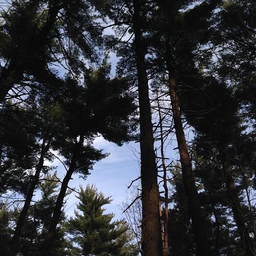 pine quarry park