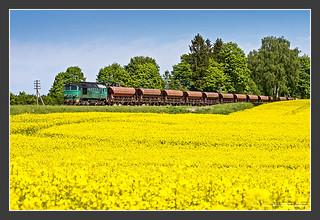 polish class ST44 and a field of rape, 15.May 2009