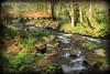 Nehalem river......
