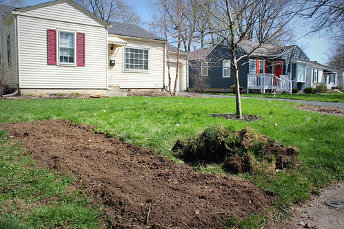 20150411. Asparagus patch in development.