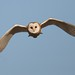 H OWL 1 by Stephen Durrant / Wildlife
