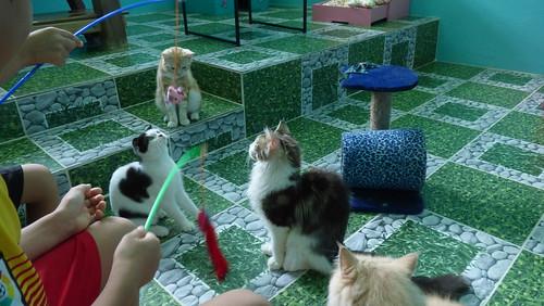 今日のサムイ島 5月13日 ネコカフェがオープンしたニャー - Nu-I samui Cat Cafe