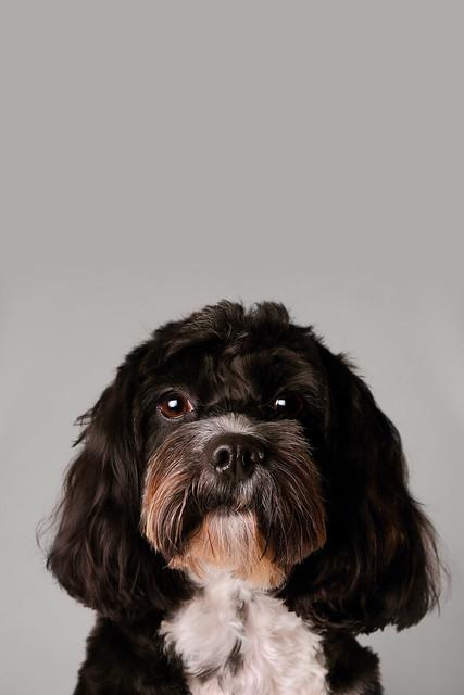 Dog Show Milton Keynes