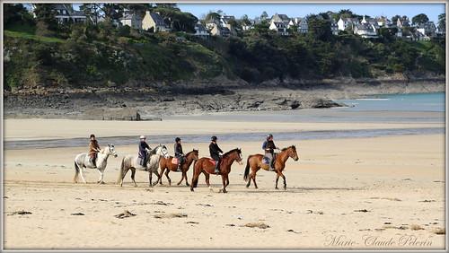 HORSES ON THE BEACH...................
