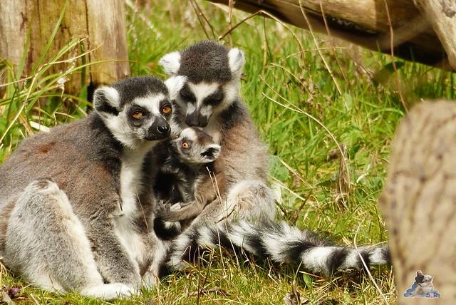 Tierpark Berlin 12.04.2015 159