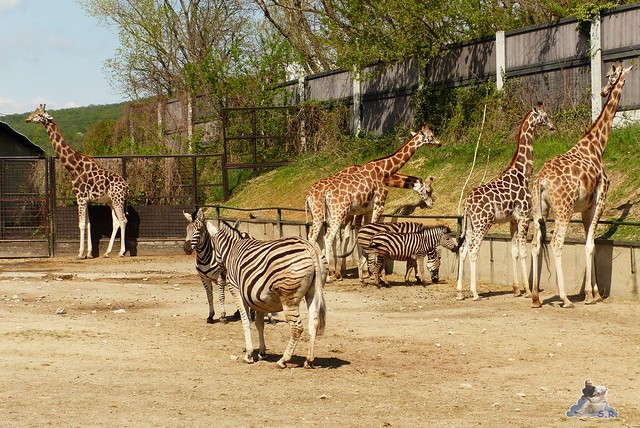 Zoo Bratislava 18.04.2015 176