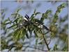 1301 Eth. Oiseaux 2901