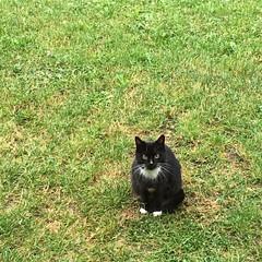 #chat #cat #lozère #grandrieu - Photo of Saint-Bonnet-de-Montauroux