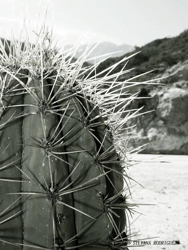 Autor: silvanesca