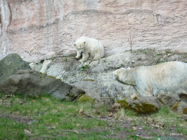 15-so ein kleiner Bär paßt überall hin