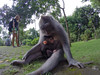 Bali w Lutym