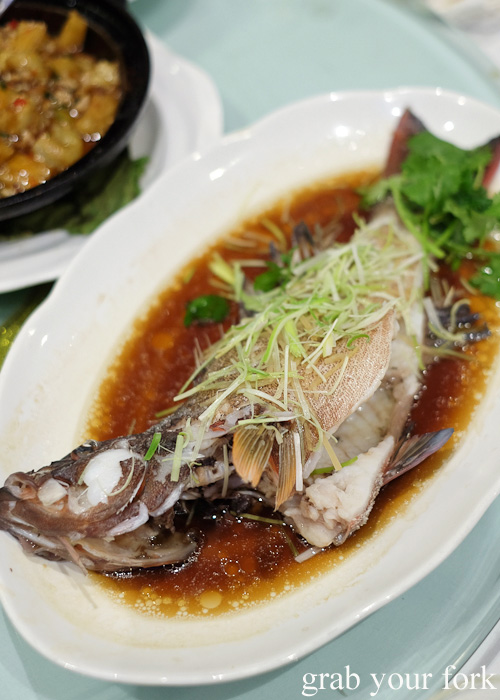 Steamed live coral trout at Golden Palace Seafood Restaurant, Cabramatta
