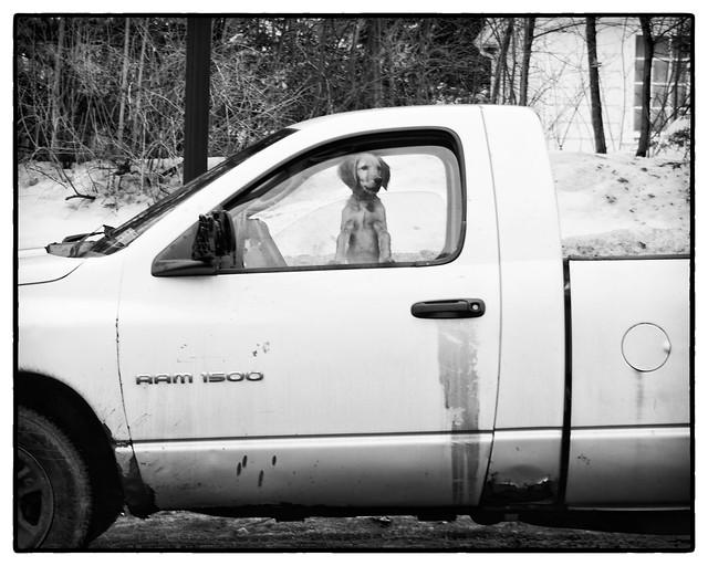 IMG_3799 Dog in Truck