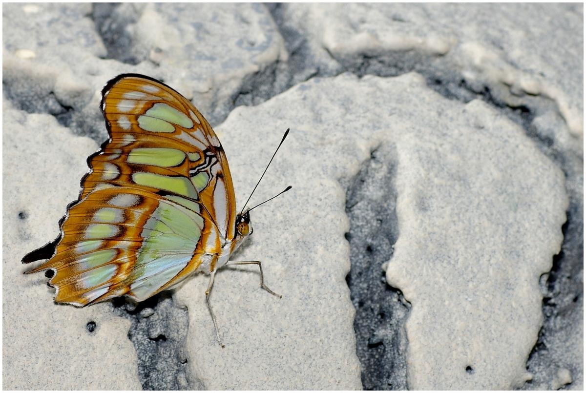Papillons en Fêtes 2015 16823646398_c09c4d05e8_o