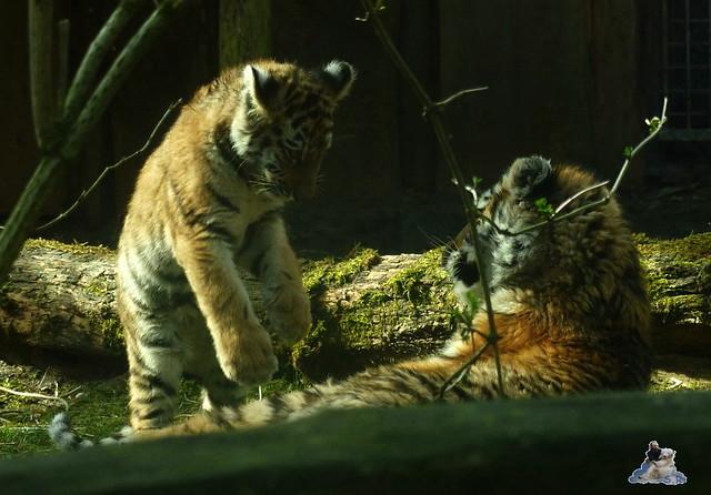 Zoo Eberswalde 22.03.2015   237