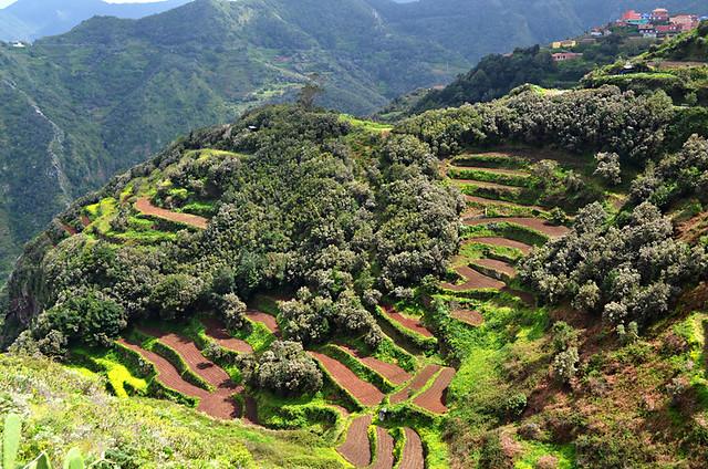 Neat Terraces, Anaga, Tenerife