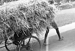 Rickshaw hauling straw, India, 1952