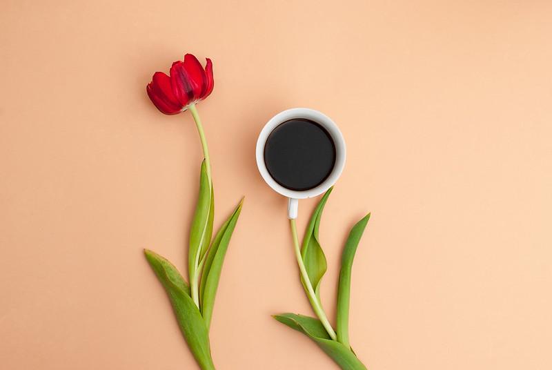 Tulipinhas ♥