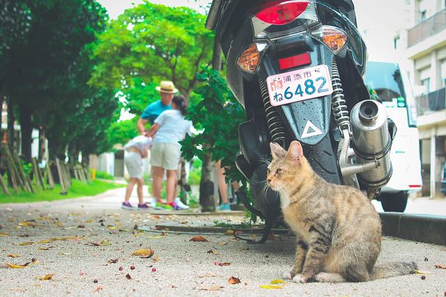 對馬丸紀念館旁的小貓