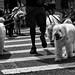 Crosswalk Dogs by CVerwaal