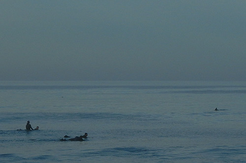 DSCN2190 - Shark sighting at Seascape Beach in Aptos, 7:16am, 15 March 2015 - Close up