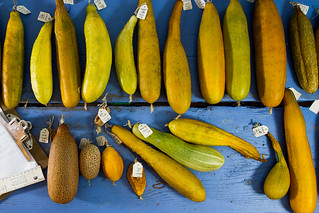 cucumber_research #vegetables #science